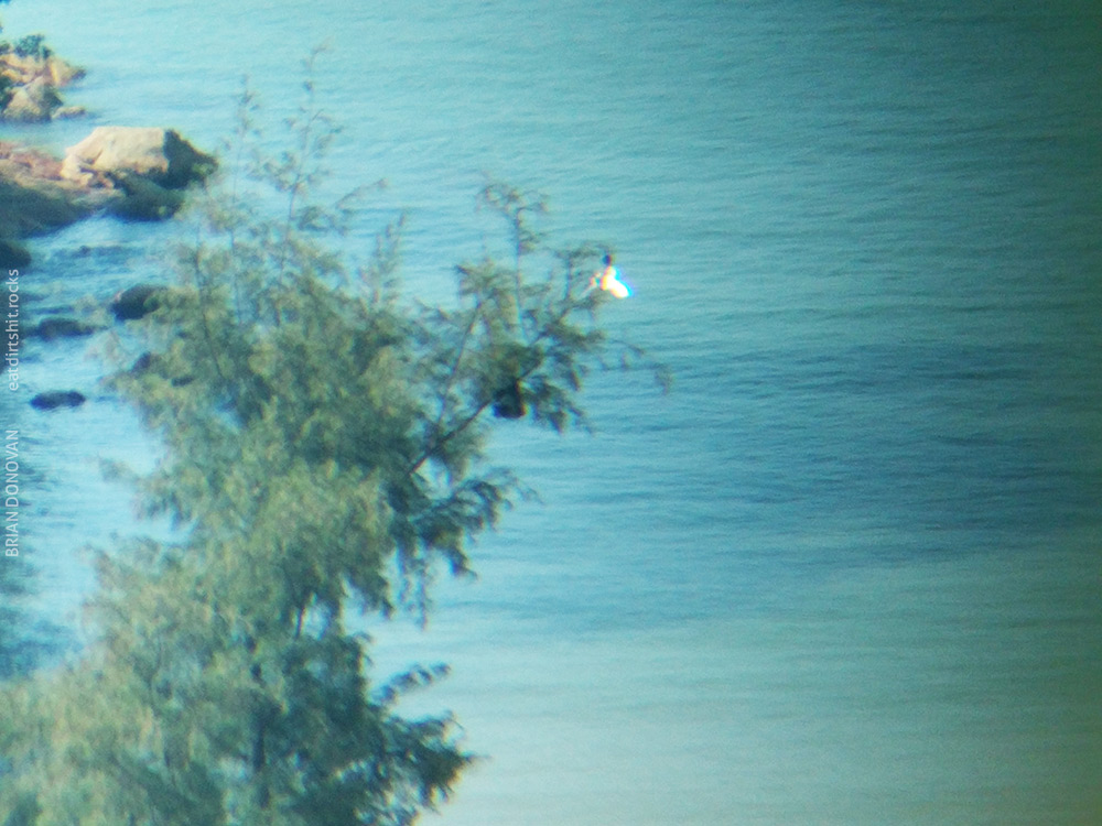 A big white bird in a tree at the beach opposite our bedroom window..